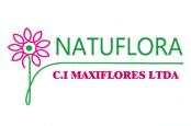 logo_maxiflores_lc-174x115
