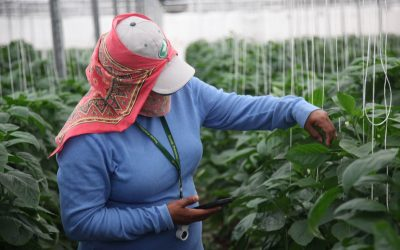 Scarab Makes a Difference in Global IPM