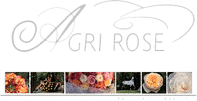 aor-rose