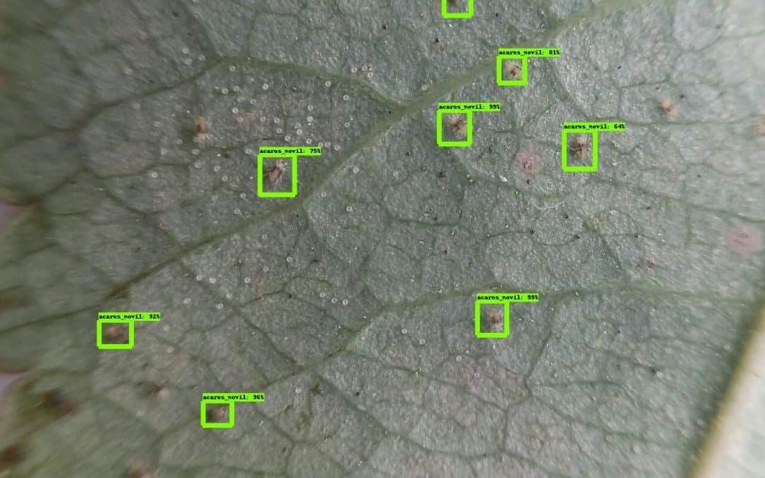 Los seres humanos siguen siendo cruciales, ya que el análisis de imágenes de IA para el manejo de plagas y enfermedades de cultivos tiene un largo camino por recorrer