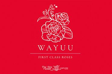 Wayuu 371 x 246